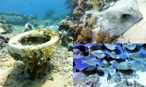 Yolanda Reef, Ras Mohamed National Park